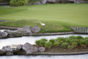 Trilogy 18th hole with egret